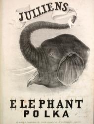 The elephant polk