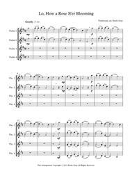 Lo, How a Rose E'er Blooming (4 violins)