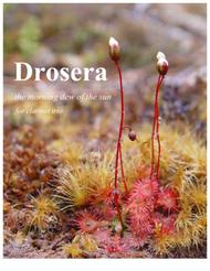 Drosera: the morning dew of the sun