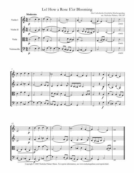 Lo! How a rose e'er blooming (Es ist ein Ros' entsprungen) - easy string quartet