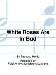 White Roses Are In Bud