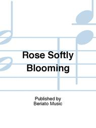 Rose Softly Blooming
