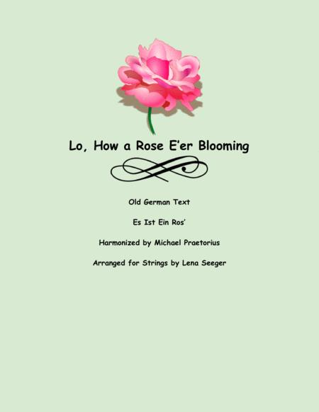 Lo, How a Rose E'er Blooming (string trio)
