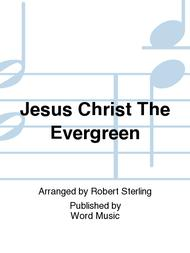 Jesus Christ The Evergreen